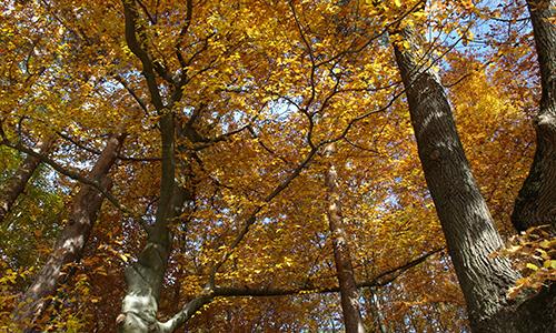 191103 NPaktiv Krautter Naturpark…erzählt! Herbstwaldwanderung im südlichen Welzheimer Wald