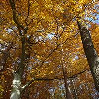 Herbstwaldwanderung im südlichen Welzheimer Wald