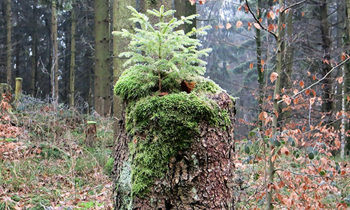 200223 NPaktiv Koehler1 Naturpark aktiv   Kommenturwald Sittenhardt
