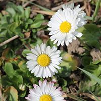 Naturpark aktiv - Auf den Spuren des Frühlings