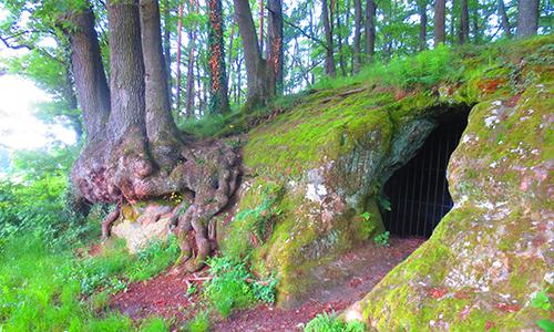 200322 NPaktiv Genthner Naturpark aktiv   Die geheime Sprache der Bäume