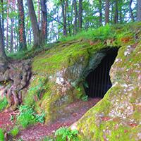 Naturpark aktiv - Die geheime Sprache der Bäume