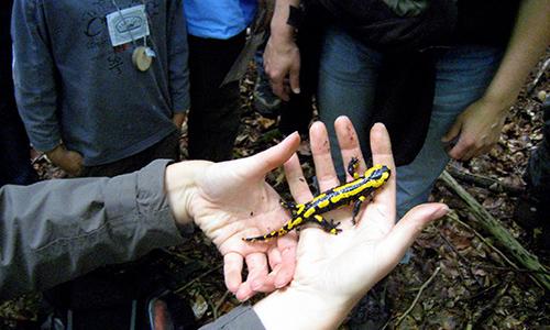 200322 NPaktiv Kuch Naturpark aktiv   Wo die Regenmännchen wohnen