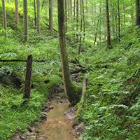 Naturpark aktiv - Wildromantisches Bernbachtal