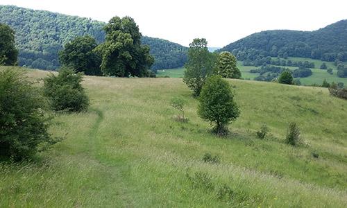200726 NPaktiv Noak Naturpark aktiv   Meditativ und fit in den frühen Morgen