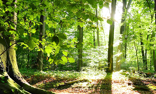 200830 NPaktiv Noak2 Naturpark aktiv   Morgenstund hat Gold im Mund