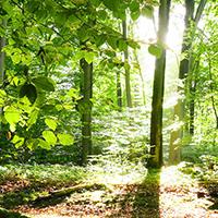 Naturpark aktiv - Morgenstund hat Gold im Mund