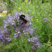 Bienenjahr im Naturpark