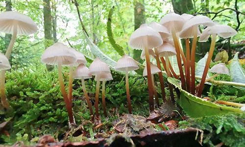 2010 Pilzausstellung Grab 5 Viele Besucher   viele Pilze   viel Abstand