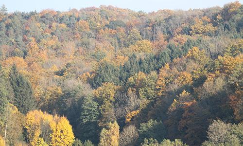 201108 NPaktiv Uter ABGESAGT: Naturpark aktiv   Bunt sind schon die Wälder
