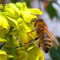 Thema im Naturparkteller sind Bienen