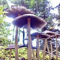 Pilze im Naturpark