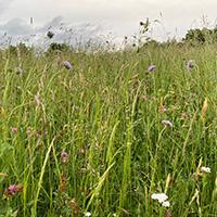 Wildes Murrhardt - Waldtieren auf der Spur