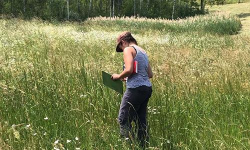 2020 10 Bluehende NPBW Evaluation 2 Wildblumenwiesen des Projekts Blühende Naturparke immer artenreicher