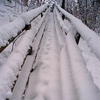Winterschlaf - Winterurlaub - Winterpelz - Copyright: Reiss