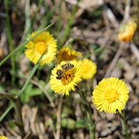 Naturpark aktiv 2021 - Frühlingsblüher