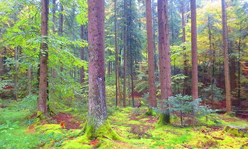 210402 NPaktiv Genthner Naturpark aktiv 2021   Waldbaden   Wellness in der Natur