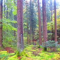 Naturpark aktiv 2021 - Waldbaden - Wellness in der Natur