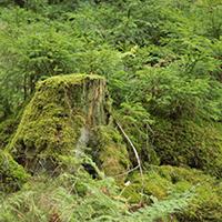 Naturpark aktiv 2021 - Wald im Wandel