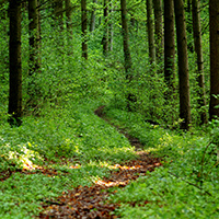 Naturpark aktiv 2021 - Waldbaden im Kraftort Natur