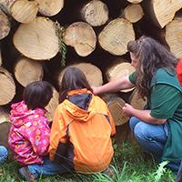 Naturpark aktiv 2021 - Baum und Bäume mehr als Holz und Laub