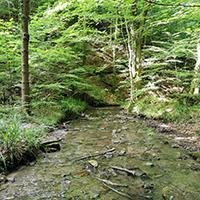 Naturpark aktiv 2021 - Wildromantisches Bernbachtal