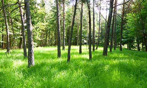 210711 NPaktiv Klinger Naturpark aktiv 2021   Orchideenzauber
