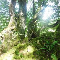 Naturpark aktiv - Copyright: Noak