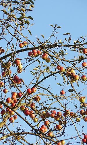 211010 NPaktiv Rombach1 Naturpark aktiv 2021   Entdecken und genießen   Äpfel und mehr