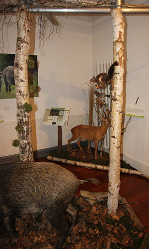 500 170724 Eroeffnung Jagdausstellung 67 Neue Sonderausstellung im Naturparkzentrum