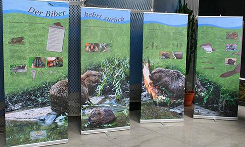 Biberausstellung Teil 1 Der Biber ist zurück – Wanderausstellung im Naturparkzentrum