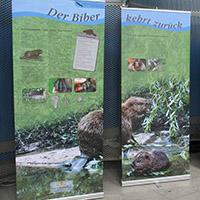 """Ausstellung """"Der Biber ist wieder präsent"""" ab 15. Oktober im Naturparkzentrum"""