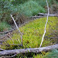 Biotop im Naturschutzgebiet Tal der Blinden Rot