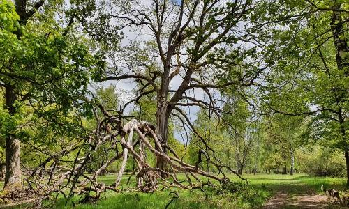 Erlebnisstipp Viehweide Michelbach NPSFW Archiv 500x300 Radtour nach Waldenburg und zu den Weidewäldern bei Waldenburg