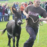 Mainhardter Eselrennen