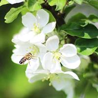 Honigbiene IMG 9925 edited 1 Unsere nachhaltigen Partnerbetriebe