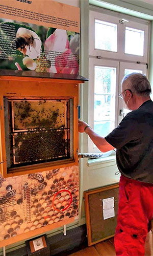 IMG 3578 Bienen im gläsernen Sommerquartier eingezogen