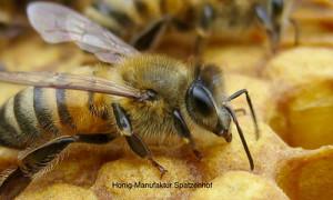 Honig & Bienenwachs: gesunde, unbelastete Produkte ohne Plastik aus der Honig-Manufaktur Spatzenhof
