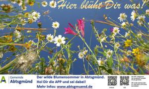 Wilder Blumensommer in Abtsgmünd