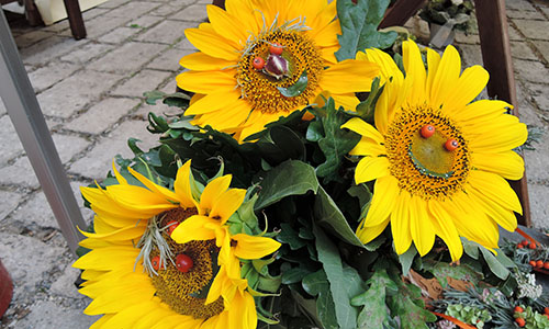 Monatsfoto Freundliche Sonnenblumen