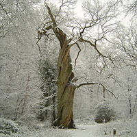Stille Wälder