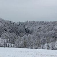 Winterwald in den Berglen