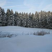 Spannende Wanderung mit Naturparkführerin Susanne Bosch