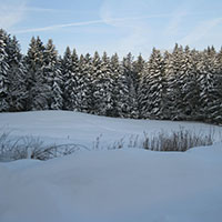 NL 160131 NPaktiv Bosch Naturpark aktiv   Abenteuerwanderung auf dem alten Schlittenweg
