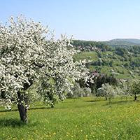 Genießertour rund um Alfdorf
