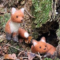 NL 160424 NPaktiv Kiesel Naturpark aktiv   Der Fuchs   das Geheimnis seines Erfolges