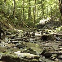 Wasserfälle und urwaldartige Schluchten