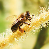 NL Titelbild Bienenjar 2017 net Honigschulung