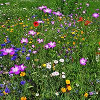 Wildblumensommer Abtsgmünd