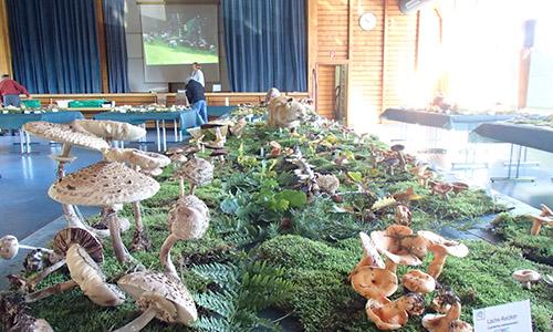 PA140003 Abgesagt: Große Pilzausstellung im Schwäbischen Wald